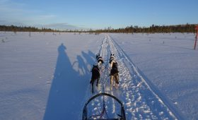 husky-Finland-wintersport