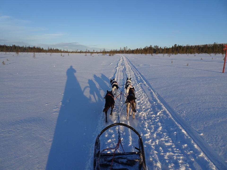 husky-Finland-wintersport